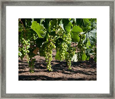 Young On The Vine Framed Print by Kent Sorensen