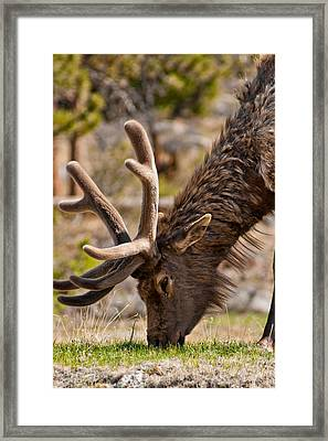 Young One Framed Print by Colleen Coccia