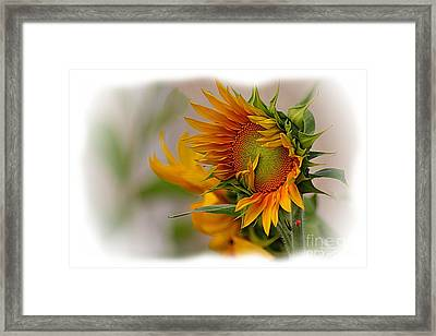 Young Sunburst Framed Print