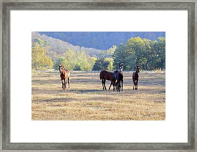 'youngsters In The Paddock' Framed Print by PJQandFriends Photography