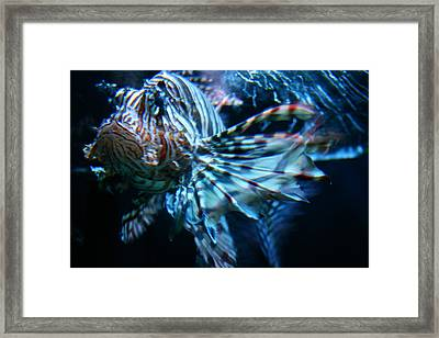 Your Lion Fish Framed Print