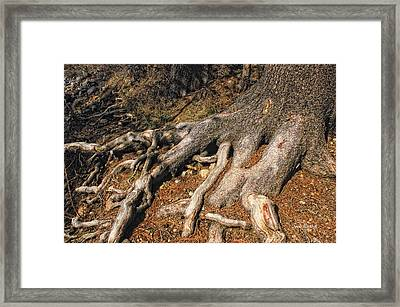 Your Roots Are Showing Framed Print by Donna Blackhall