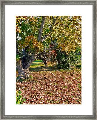 Youthful Memories  Framed Print by Pamela Patch