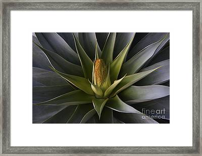Framed Print featuring the photograph Yucca Bloon by Craig Lovell