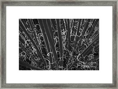 Yucca In Black And White Framed Print by Glennis Siverson