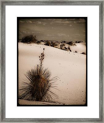 White Sands, New Mexico - Yucca Framed Print
