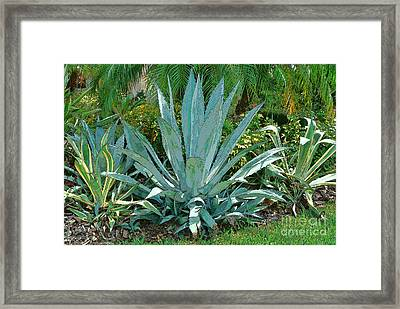 Yucca Plants Framed Print