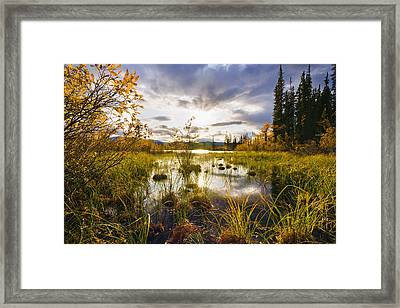Yukon River And Fall Colours At Sunset Framed Print