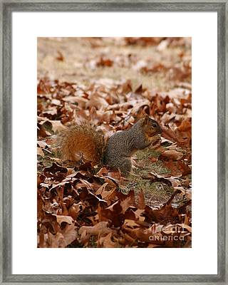 Framed Print featuring the photograph Yummy Snack by Julie Clements