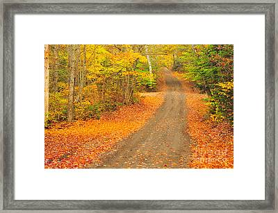 Zealand Road Framed Print by Catherine Reusch Daley