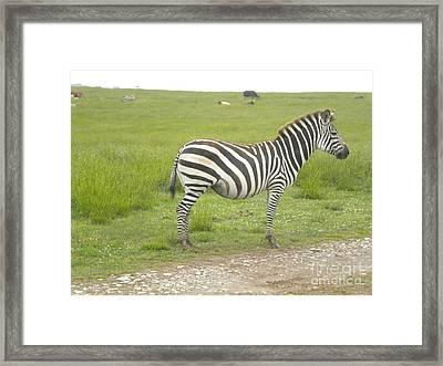 Zebra Print Framed Print by Tessa Priddy