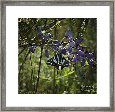 Zebra Swallowtail Butterfly 2 Framed Print