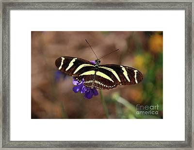 Zebra Too Framed Print