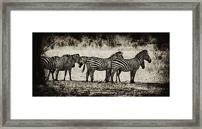Zebras In A Row Framed Print by Jess Easter