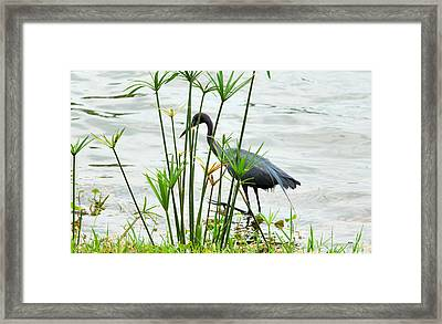 Zen Framed Print by Luis Esteves