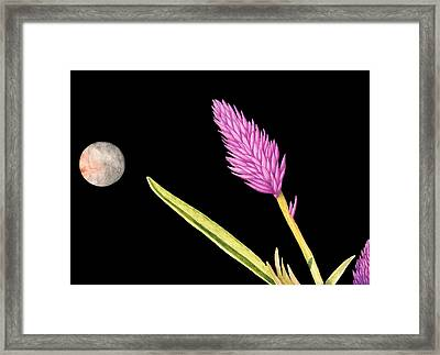 Zen Moon Framed Print by Norm Holmberg