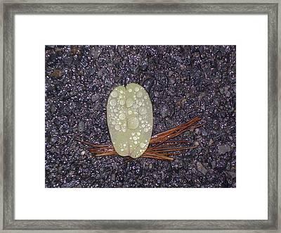 Zen Road Framed Print by Pamela Turner