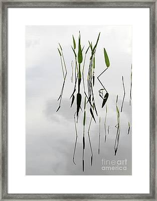 Zen Framed Print by Sabrina L Ryan