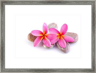 Zen Stones With Frangipani Framed Print by Wong Yu liang
