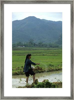 Zhuang Woman Sows Rice Seed For New Framed Print by Raymond Gehman