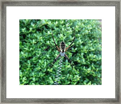 Framed Print featuring the photograph Zig Zag by Chad and Stacey Hall