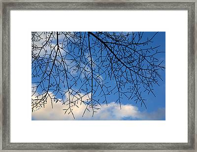 Ziggles Framed Print by Ed Smith
