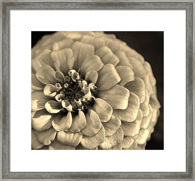 Zinna In Sepia Framed Print by Bruce Bley