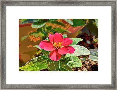 Zinna Photoart Framed Print by Debbie Portwood