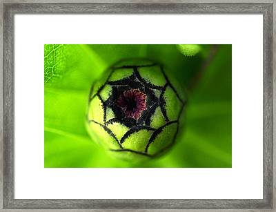Framed Print featuring the photograph Zinnia  by Puzzles Shum