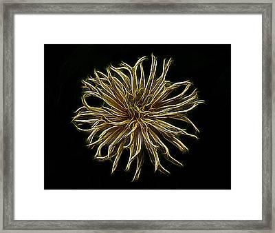 Zinnia  Framed Print by Sandy Keeton