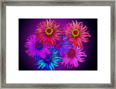 Zinnia Surprise Framed Print by Larry Bishop