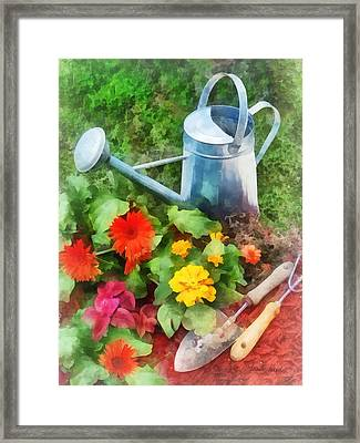 Zinnias And Watering Can Framed Print by Susan Savad