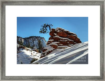 Zion National Park In Winter Framed Print by Bob Christopher