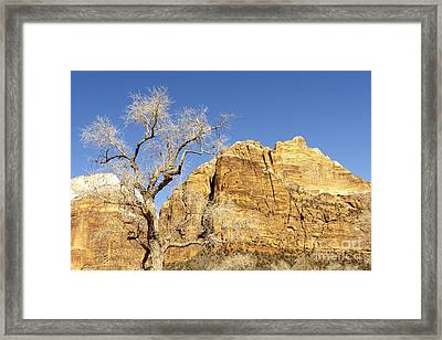 Zion Winter Sky Framed Print by Bob and Nancy Kendrick