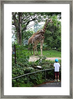 Framed Print featuring the photograph zoo by Milena Boeva