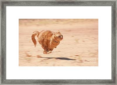 Zoom Kitty Framed Print