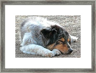 Zzzzz Framed Print by Brian D Meredith
