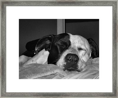 Zzzzzzz.... Framed Print by Juliana  Blessington