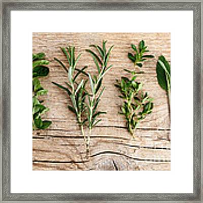 Assorted Fresh Herbs Framed Print by Nailia Schwarz