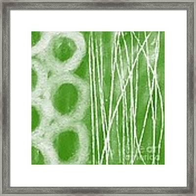 Bamboo Framed Print by Linda Woods