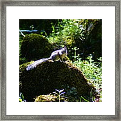 Chipmunk In The Sun Framed Print by Ben Upham III