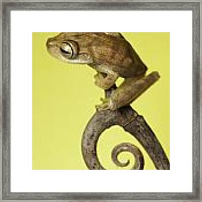 Tree Frog On Twig In Background Copyspace Framed Print
