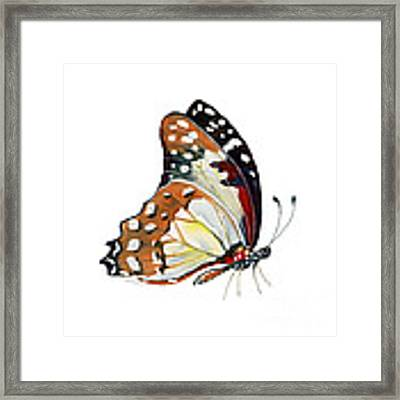 102 Perched White Lady Butterfly Framed Print by Amy Kirkpatrick