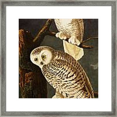 Snowy Owl Framed Print by Celestial Images