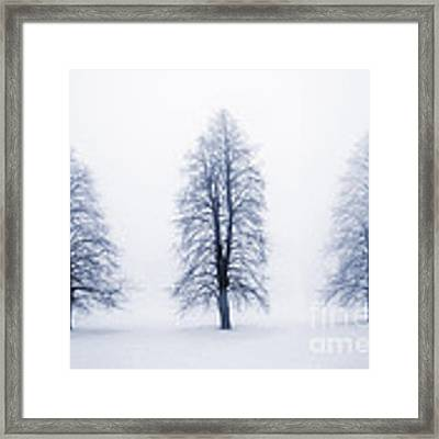 Winter Trees In Fog Framed Print