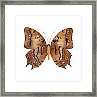 62 Galaxia Butterfly Framed Print by Amy Kirkpatrick