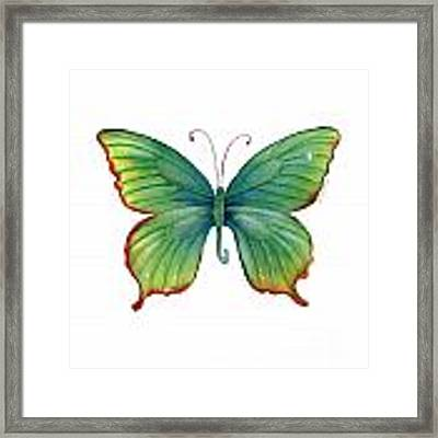 74 Green Flame Tip Butterfly Framed Print
