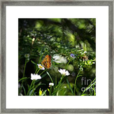 A Butterfly's World Framed Print by Belinda Greb