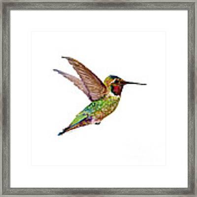 Anna Hummingbird Framed Print