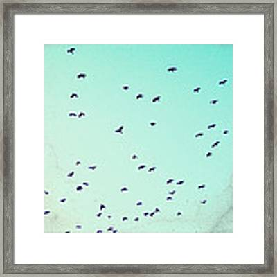 As The Crows Fly Framed Print by Lupen  Grainne
